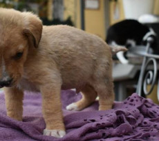 cuccioli-adozione