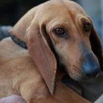 Scopri gli annunci per le cagnoline in adozione