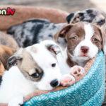 Cuccioli abbandonati: cosa fare?