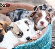 cuccioli cane abbandonati