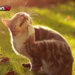 Dramma pulci a primavera, come scegliere l'antiparassitario per il proprio gatto?