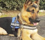 Ares cane poliziotto