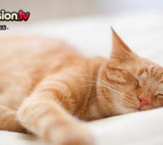 sonnolenza primavera gatto