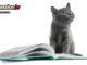 gatti letteratura