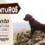 Partecipa al sondaggio Adventuros e raccontaci i gusti del tuo cane!