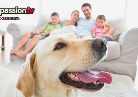 Cane-famiglia
