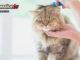 Spazzolare-il-gatto