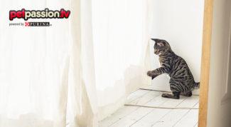 educare-gatto-tende