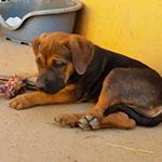 Safira-e-Siria_cuccioli-in-adozione