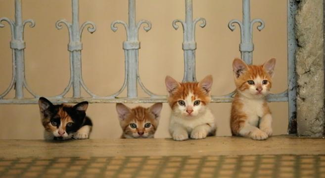 Gatti di Istanbul