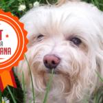 Bri, la storia di una dolce cagnolina