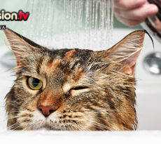 Gatti con occhi di colore diverso petpassion blog for Gatti con occhi diversi