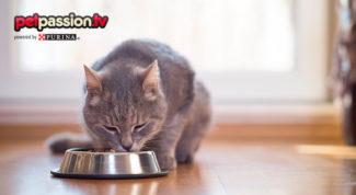 03.07_Estate-nutrizione-gatto