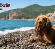 04.06_Vacanza mare cane