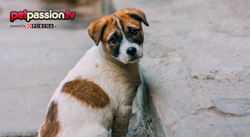 Soccorrere un cane abbandonato: cosa fare e come aiutarlo