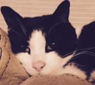 15-6-boo gatto eroe evidenza