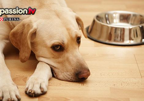 16.07_Intolleranze-alimentari-cani