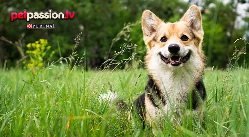 Quali sono le razze di cane più adatte a vivere in campagna?