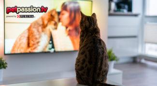 18.0_Film-con-gatti