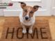 20.06_Convivenza cane casa