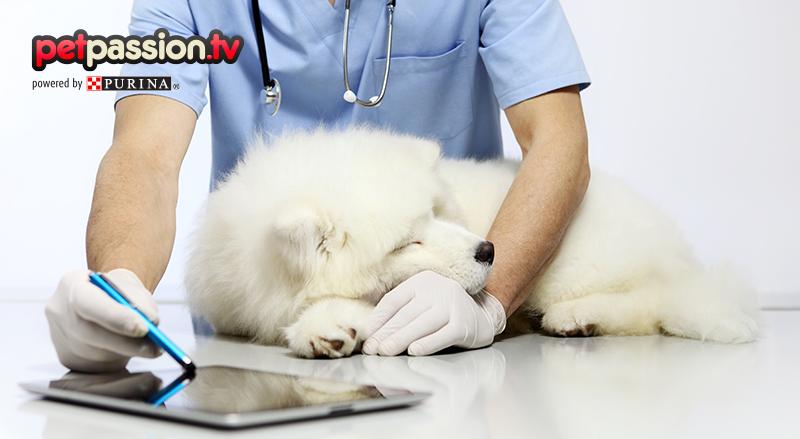 Check-up del cane, quali controlli bisogna fare per mantenerlo in … – Petpassion.tv