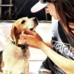 La storia da favola del beagle di Meghan Markle
