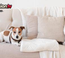 Il prurito nel cane i sintomi e i rimedi petpassion blog - Educare il cane a non salire sul divano ...
