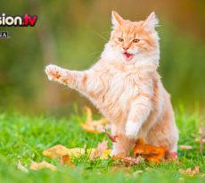 09.07_Comportamenti-strani-gatto