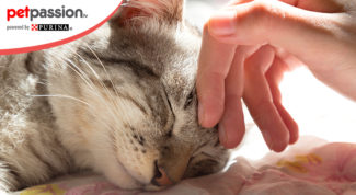 10.-Motivi-vivere-gatto