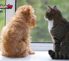 10.07_Sindrome-abbandono-cani-e-gatti