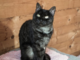 06.07_gatti adozione_cover