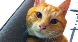 gatto rosso cronaca