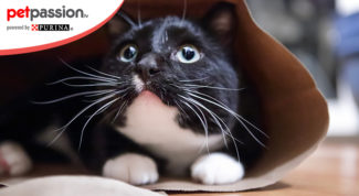 13.-Gatti-amano-nascondersi
