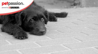 3.-Soccorso-stradale-animale-ferito