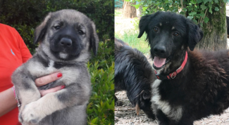 cuccioli cane adozione