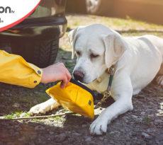 5.-Alimentazione-cane-viaggio