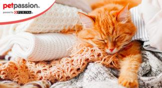 4.-Gatti-mangiano-lana