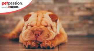 6.-Posizioni-sonno-cane