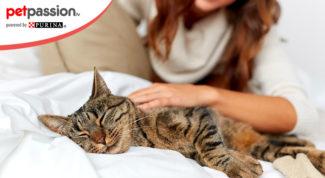 9.-Cosa-piace-ai-gatti