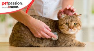 Influenza-gatto