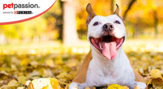 giochi cane autunno
