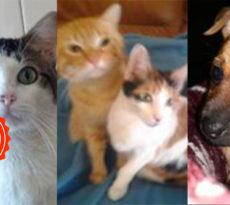 pet della settimana Famiglia gatti cane