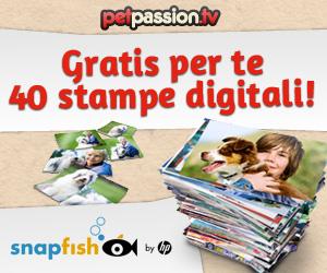 Vinci 40 stampe gratis!