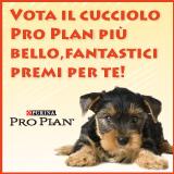 Vota il cucciolo più bello