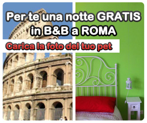 Sguardi damore  Soggiorno gratis a Roma  Petpassion