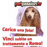 ROMA: lavaggio gratis