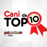 Cani da Top 10