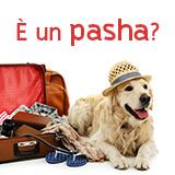 Il tuo cane è un Pashà?