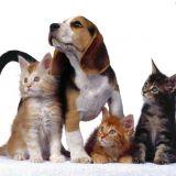Contro il traffico di cuccioli e gli annunci truffa