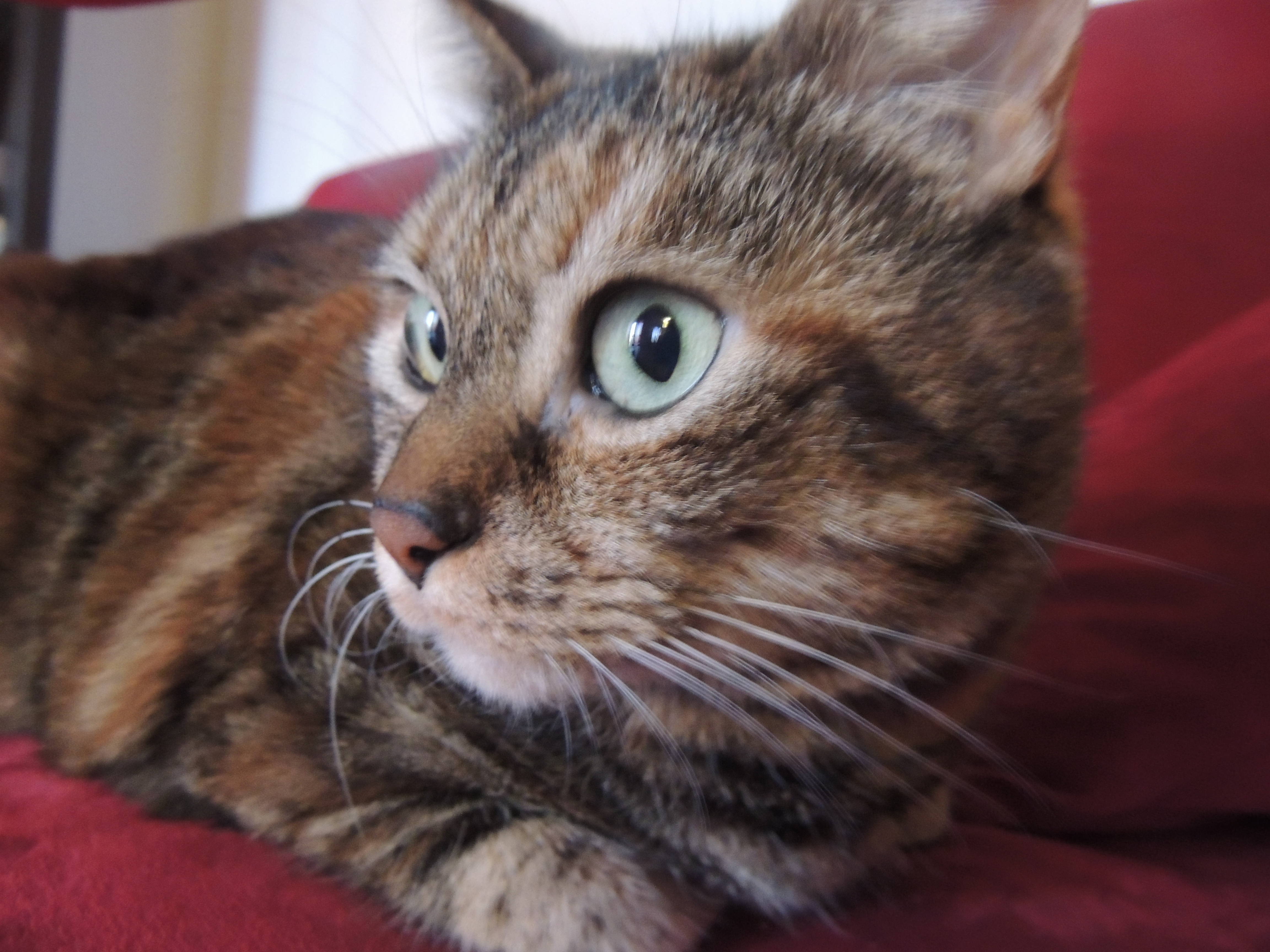 Vorrei sapere cosa ne pensate dell 39 erba 39 spaccapietra for Erba gatta effetti